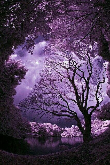 That Is Why Purple Is My Favorite Colour Purple Sky Beautiful Nature Purple Aesthetic