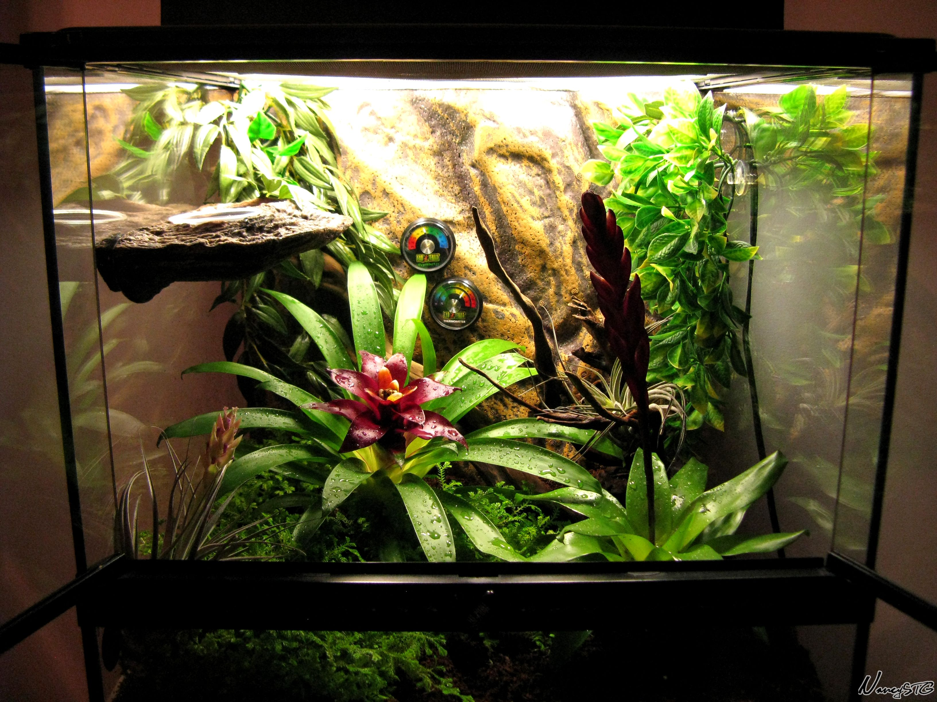 am nagement d 39 un terrarium 18 x18 x18 pour un gecko cr te crested gecko terrarium. Black Bedroom Furniture Sets. Home Design Ideas