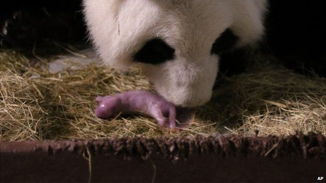 Lun Lun and one of her cubs