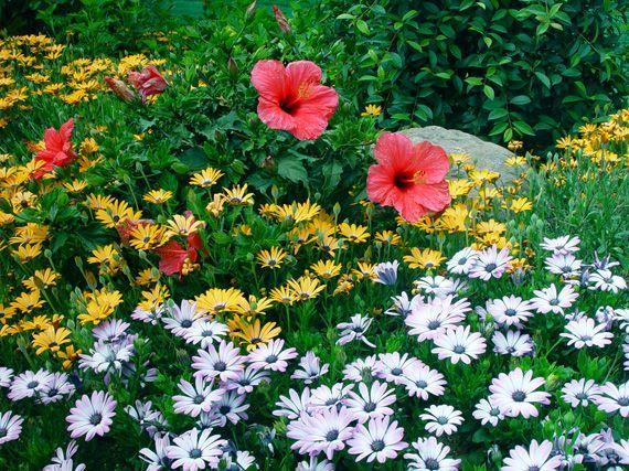 trucos floracion plantas