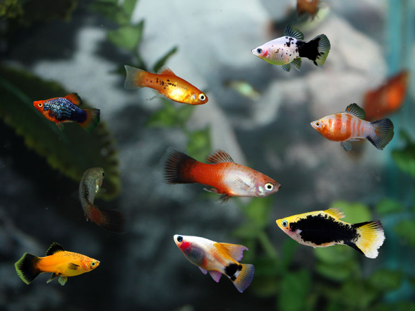 Pin By Ktaylor9291 On Swaggahhh In 2020 Aquarium Fish Tank Aquarium Fish Freshwater Aquarium Fish