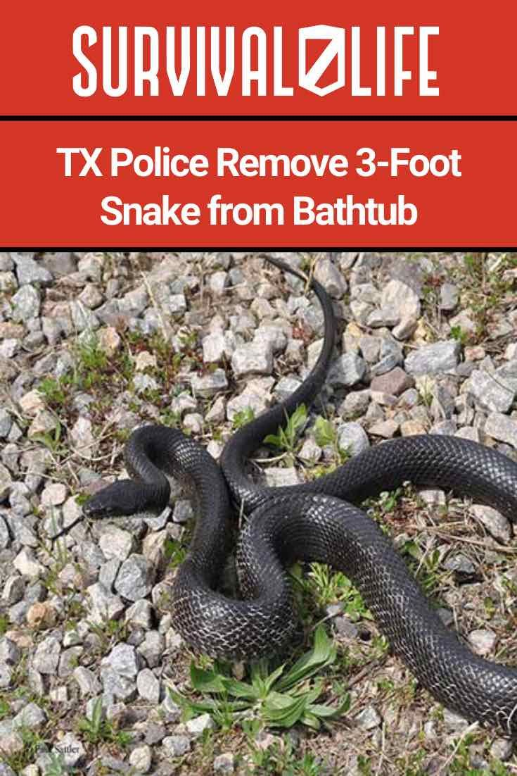 TX Police Remove 3-Foot Snake from Bathtub - Survival Life ...