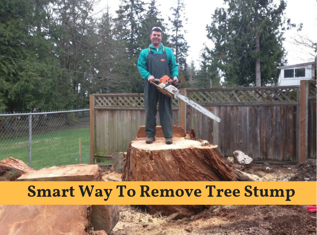 Here Is The Brief Description About How To Remove Tree Stump At