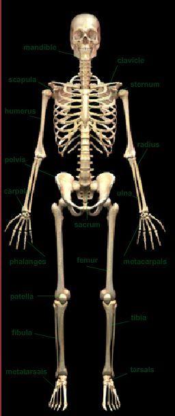 match a bone