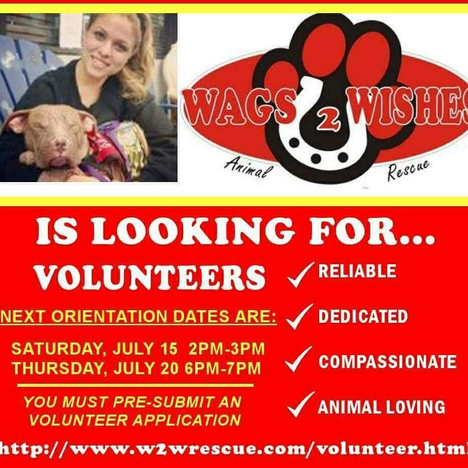 Volunteer at a rescue in Plainfield IL! Plainfield il