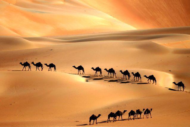 صور الامارات Archives Page 2 Of 5 آرابيا Star Wars Travel Camels Bible Back