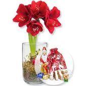Arrangement Amaryllis Igea rotWellsana.de - #amaryllis #arrangement #rotwellsana - #PflanzenimGlas #amaryllisdeko