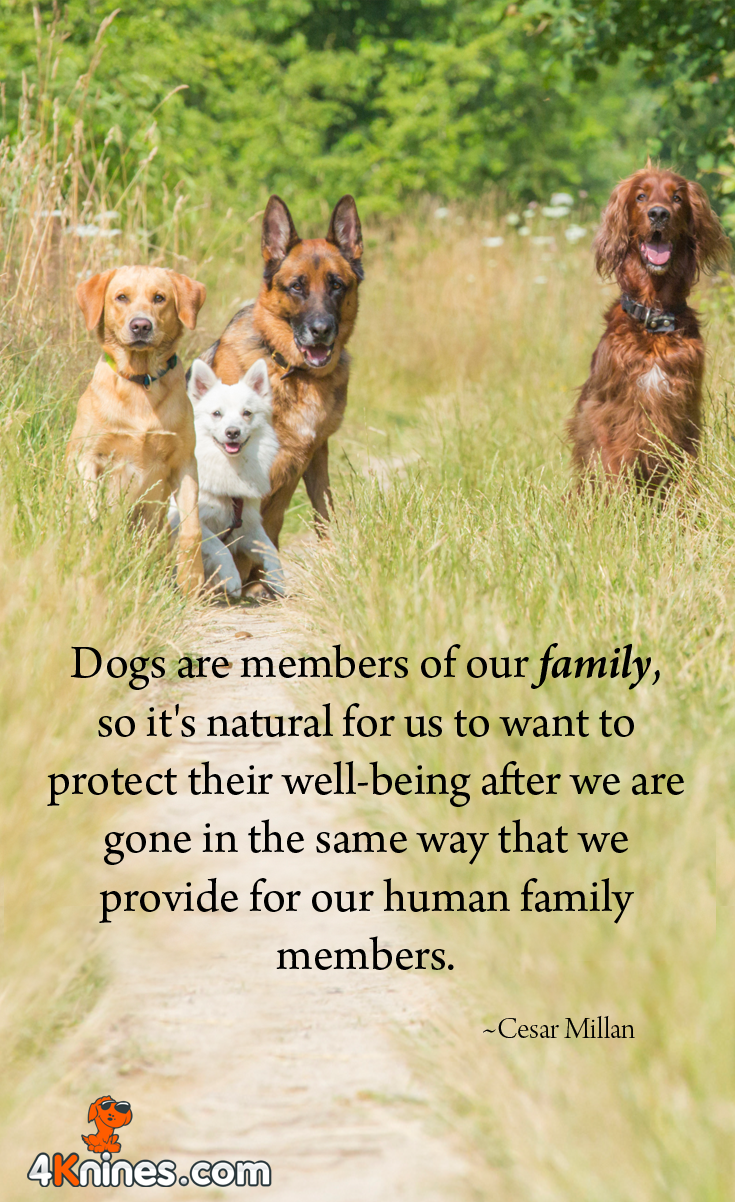 Dog shows: a selection of quotes