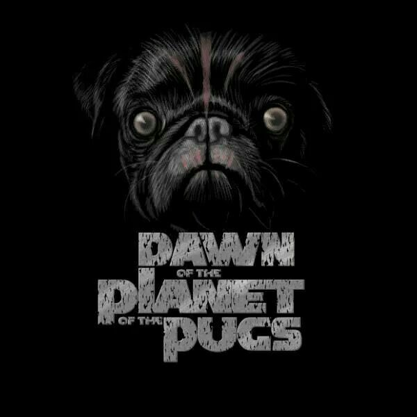 Dawn Of The Planet Of The Pugs Wait For It It S Coming To A