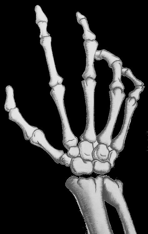 skeleton hand | sculls & bones | Pinterest | Skeletons