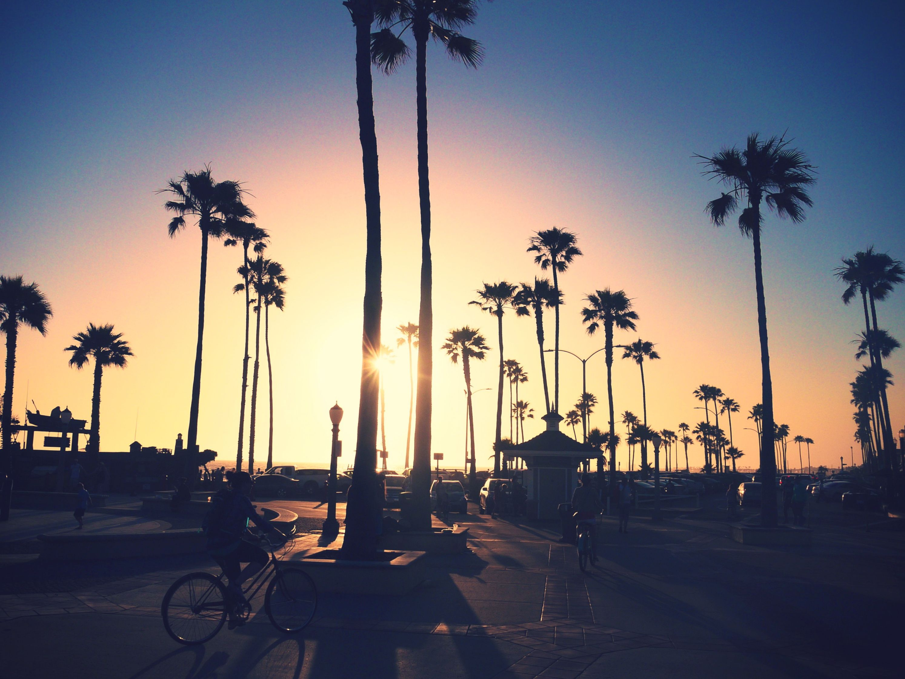 Best 25 California Palm Trees Ideas On Pinterest Summer Beach Los Angeles Palm Trees And