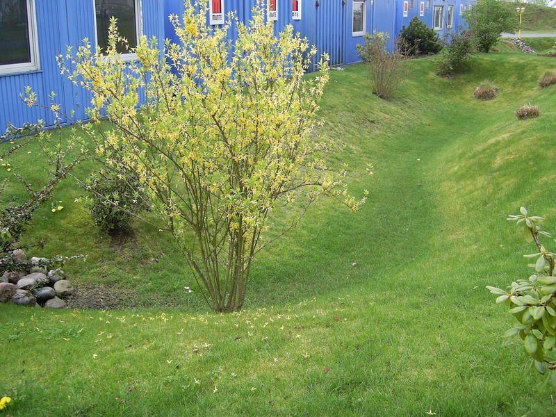 Stadt Celle Regenwasserversickerung Landschaftsarchitektur Sickergrube Garten