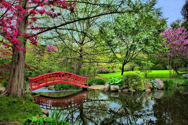 dominics japanese inspired garden book a small arched bridge in brilliant red served as a picturesque focal point in the distance - Red Japanese Garden Bridge