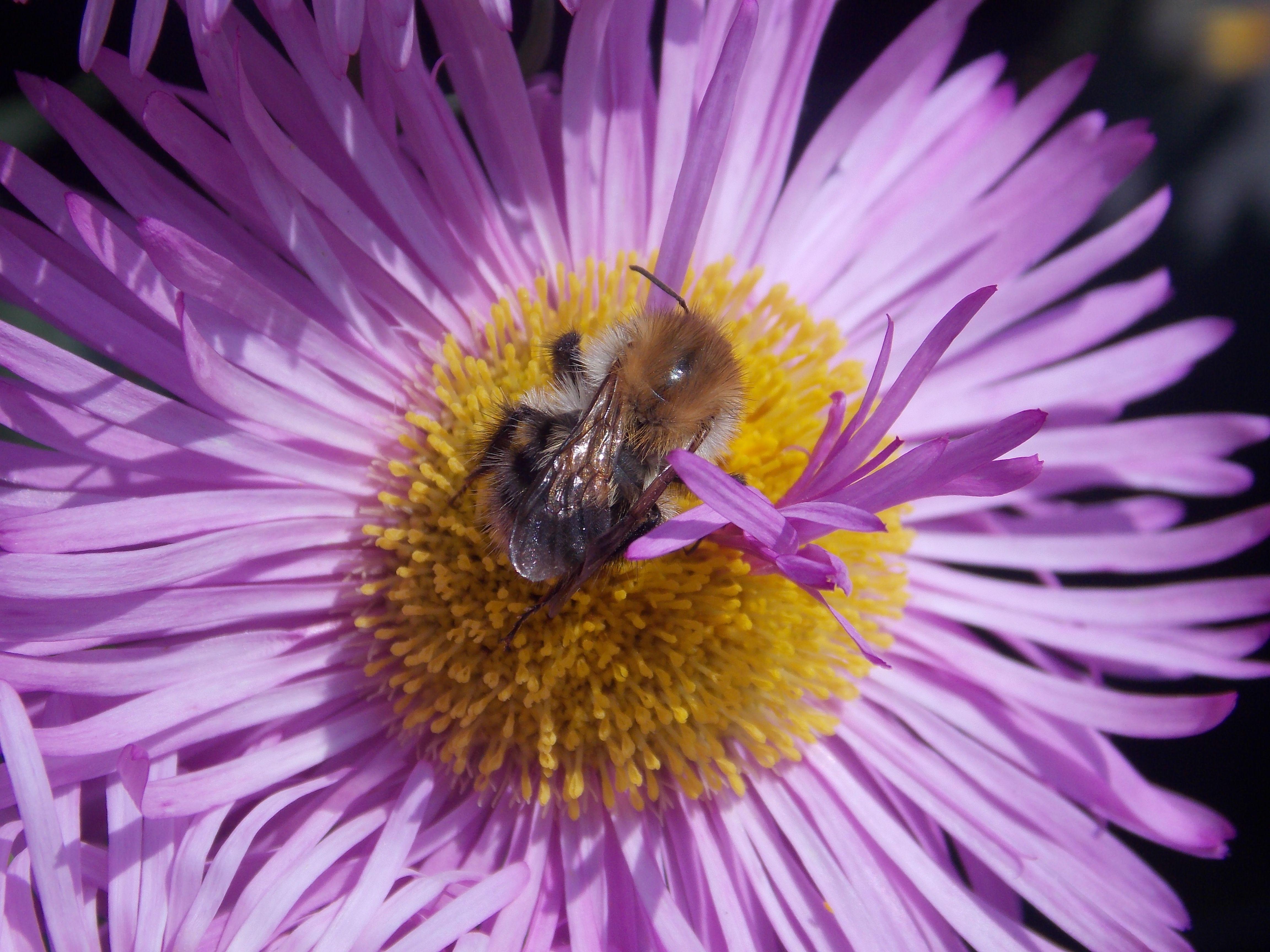 Purple flowers and bees. Garden express, Buy garden