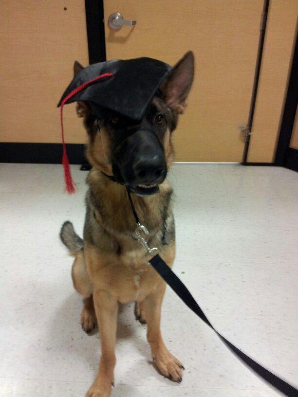 Canon The German Shepherd Graduates School German Shepherd