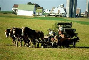 Some Amish men working in the fields