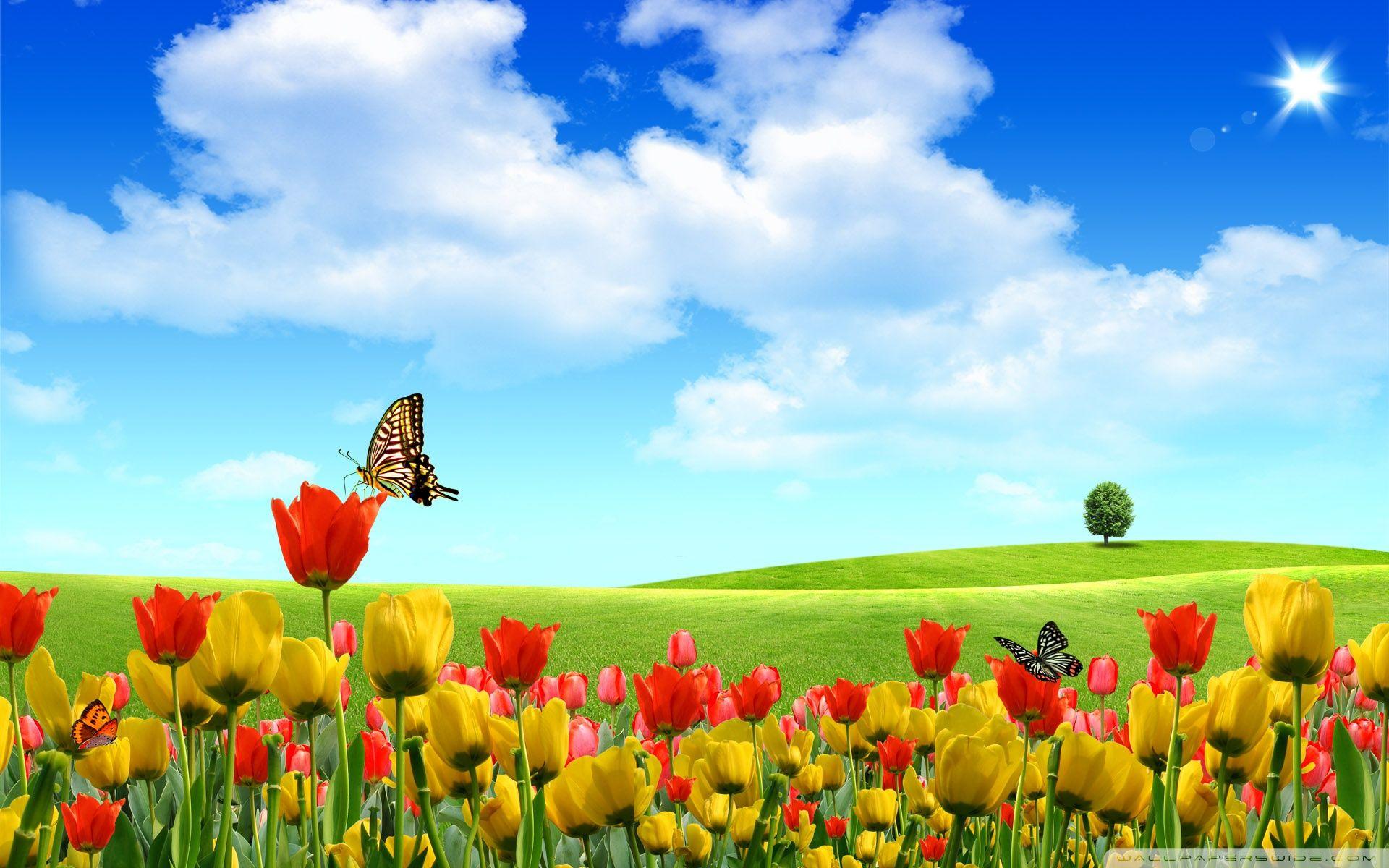 free spring wallpaper | hd wallpapers | pinterest | spring wallpaper