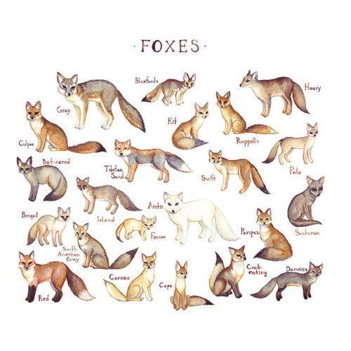 fox illustrations & names | My Love | Fox art, Fox, Bat