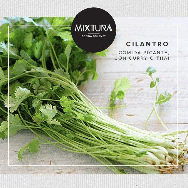 """""""#CombinacionesMixtura El Cilantro es un ingrediente perfecto para las comidas picantes, con curry o thai. #tips mixtura #mixtura #mixturagourmet #cilantro #hierbas #herbs"""" Photo taken by @mixturagourmet on Instagram, pinned via the InstaPin iOS App! http://www.instapinapp.com (10/22/2014)"""