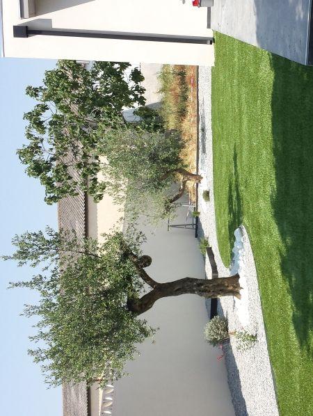 450 598 jardin et terrasse pinterest for Decoration jardin olivier
