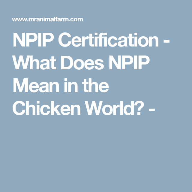 Npip Certification What Does Npip Mean In The Chicken World