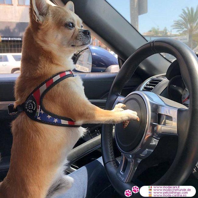 Brustgeschirr Für Kleine Hunde Chihuahua Mit Kordelzug