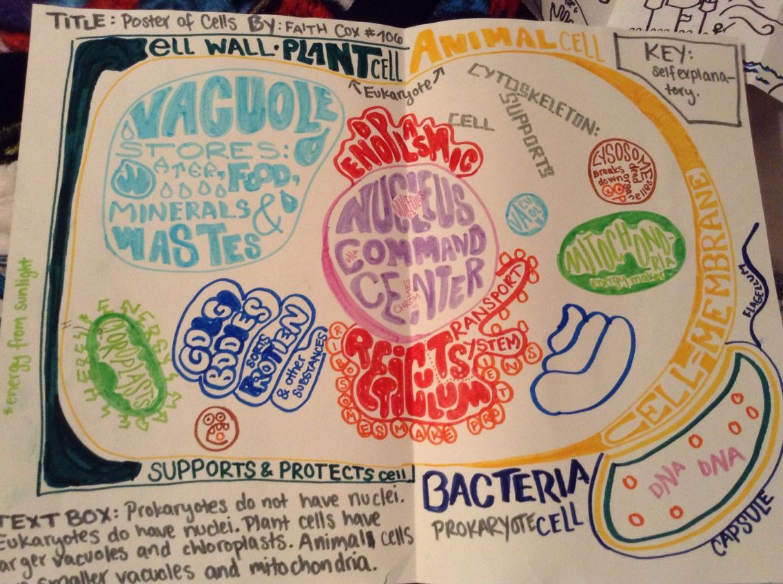 Biology Cell Project Eukaryotic And Prokaryotic Poster More