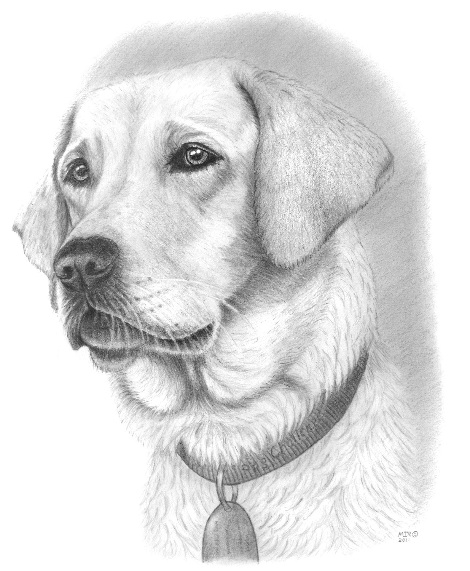 Pretty dog drawing