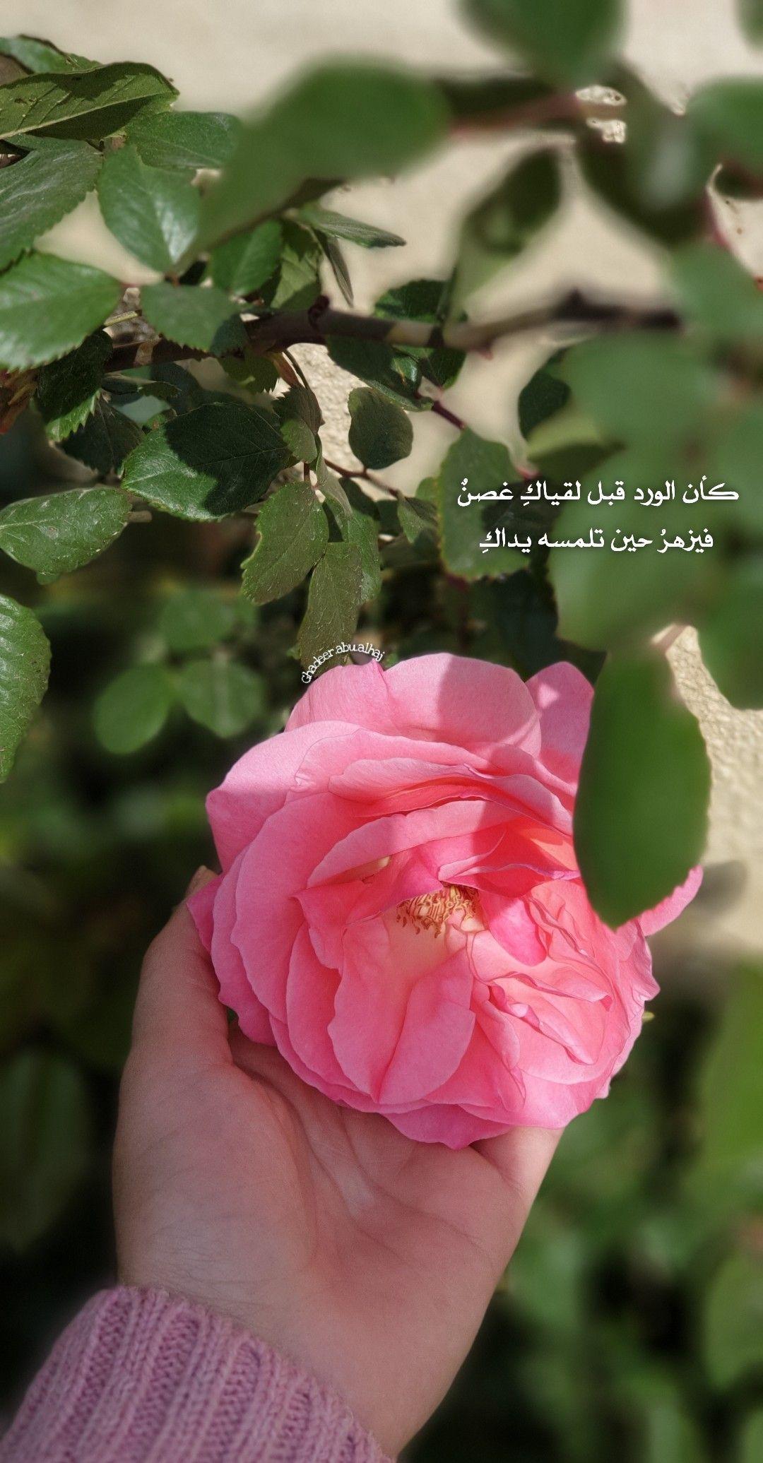 ورد زهر صور مصورات اقتباسات Pink Flower سنابات انستغرام In 2021 Flower Aesthetic Dark Wallpaper Iphone Daisy Art
