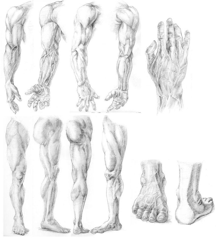 Anatomy Study By Cielrune On Deviantart Drawing Legs Feet And