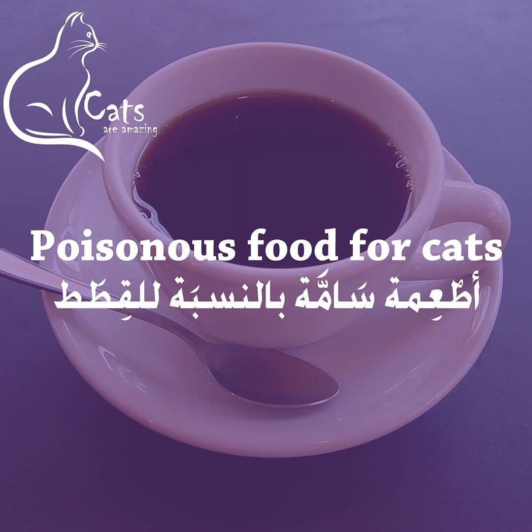 Unhealthy Food For Cats طعام غير صحي للقطط Source Vets Now Com Catsoftheday Cat Cats Cats Of Instagram Catsofinstagram Cat Food Food Glassware