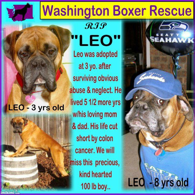 Boxer Rescue, Pet Loss, Custom Cards