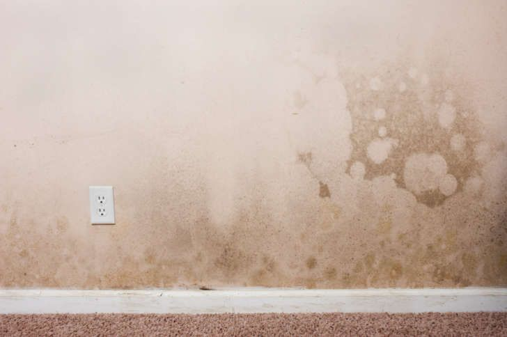The Best Ways To Clean Mold Off Walls In Bathroom 6 Cleaning Hacks In 2020 Mold Remover Cleaning Mold Remove Mold From Walls