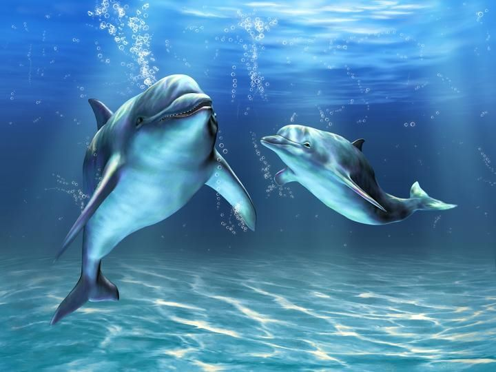 Great Dolphins Hd Wallpaper For Your Desktop Computer Tablet Or Phone High Definition Blog Dolphins Animals Dream Blanket