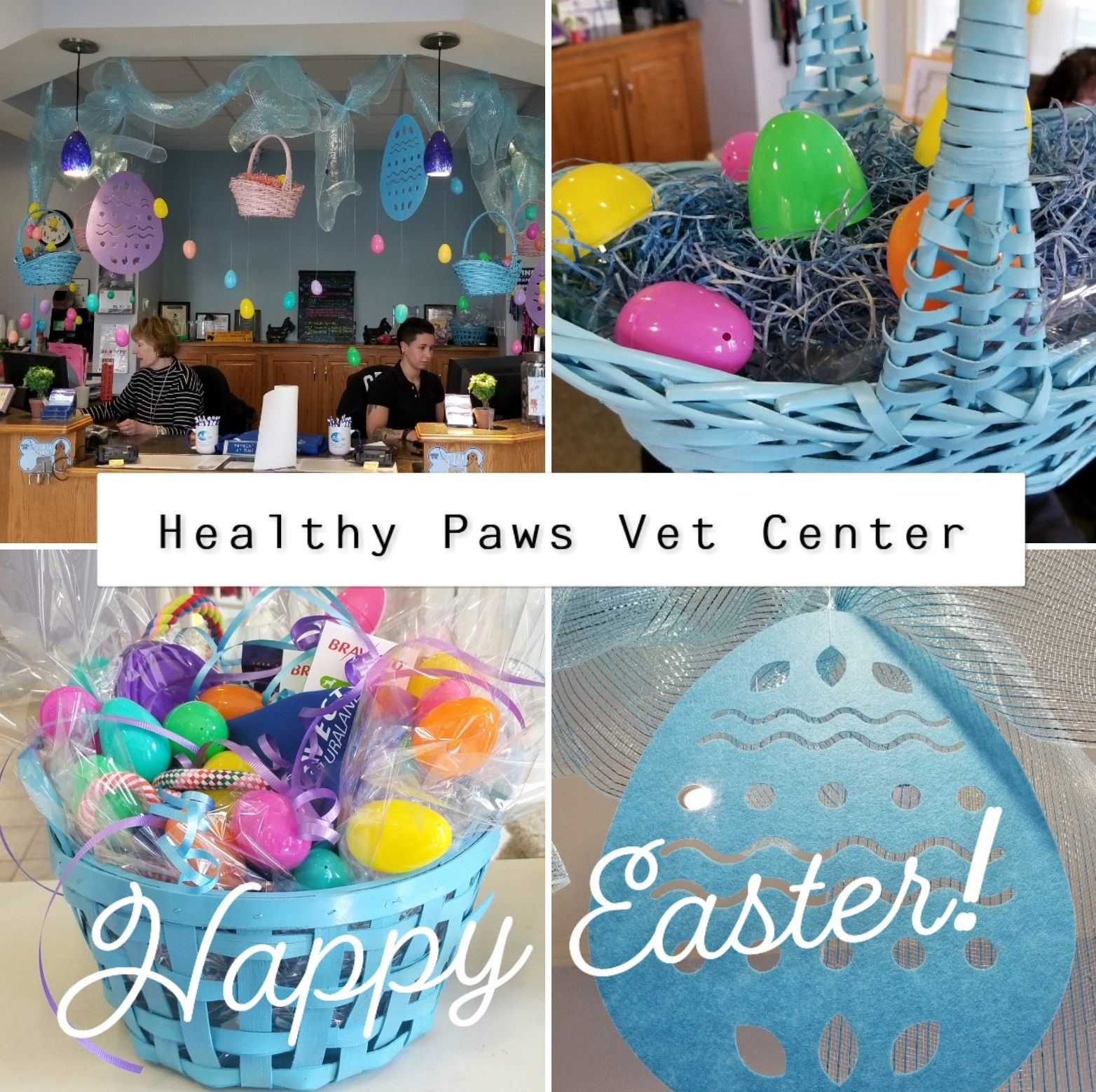 Pin on Healthy Paws Veterinary Center, MA