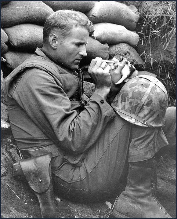 """""""Accepting her fate as an orphan of war, 'Miss Hap' a two-week old Korean kitten chows down on canned milk, piped to her by medicine dropper with the help of Marine Sergeant Frank Praytor ... The Marine adopted the kitten after its mother was killed by a mortar barrage near Bunker Hill. The name, Miss Hap, Sergeant Praytor explained, was given to the kitten 'because she was born at the wrong place at the wrong time'."""" Korea, ca 1953"""