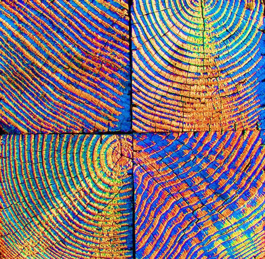 Rare Rainbow Wood Photograph Eucalyptus Tree Furniture Trees To