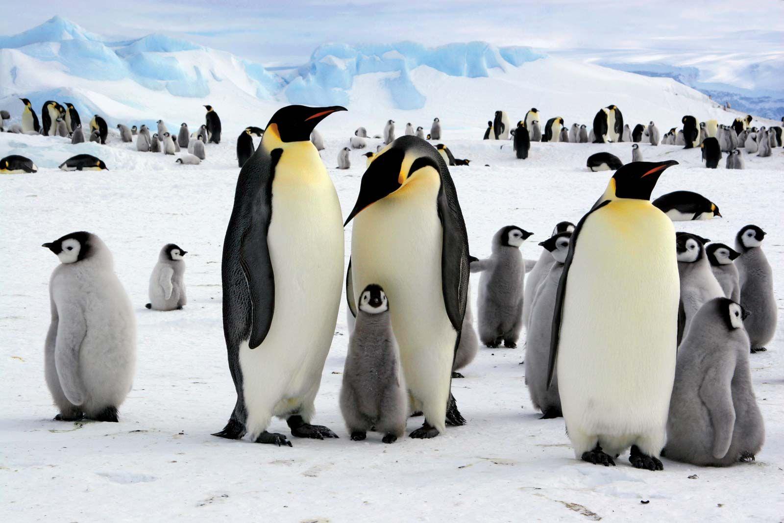 12++ What animals live in antarctica ideas