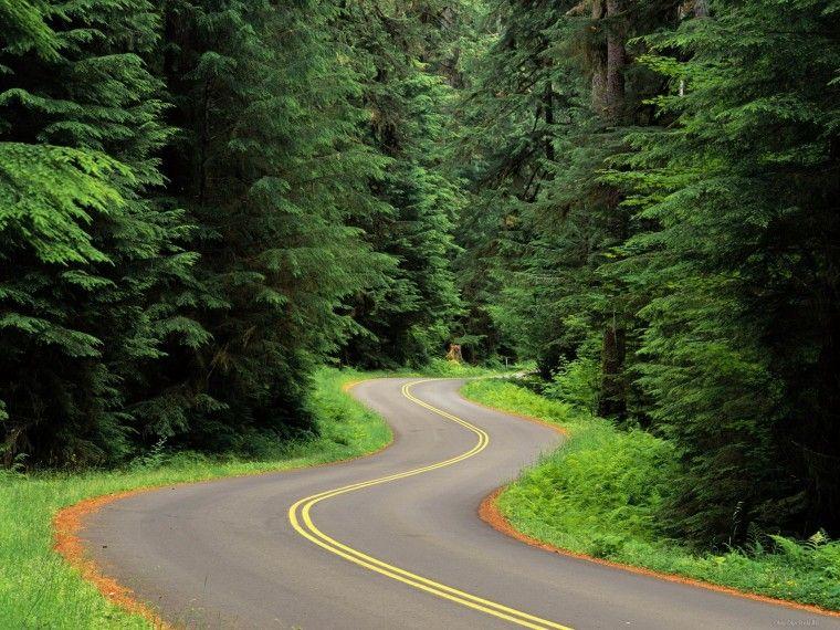 Лесная дорога - Обои для рабочего стола, картинки, фоны ...
