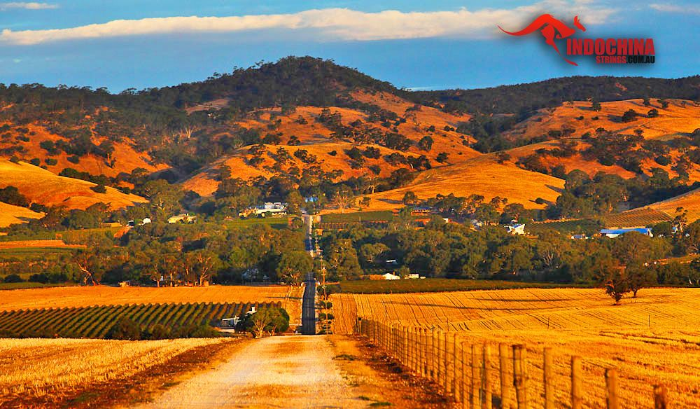 The Barossa Valley is a valley in South Australia located 60 km northeast of the Adelaide city centre and which is notable as a major wine-producing region and tourist destination. #indochinastringstarvel #traveladventure #Australia  www.indochinastrings.com