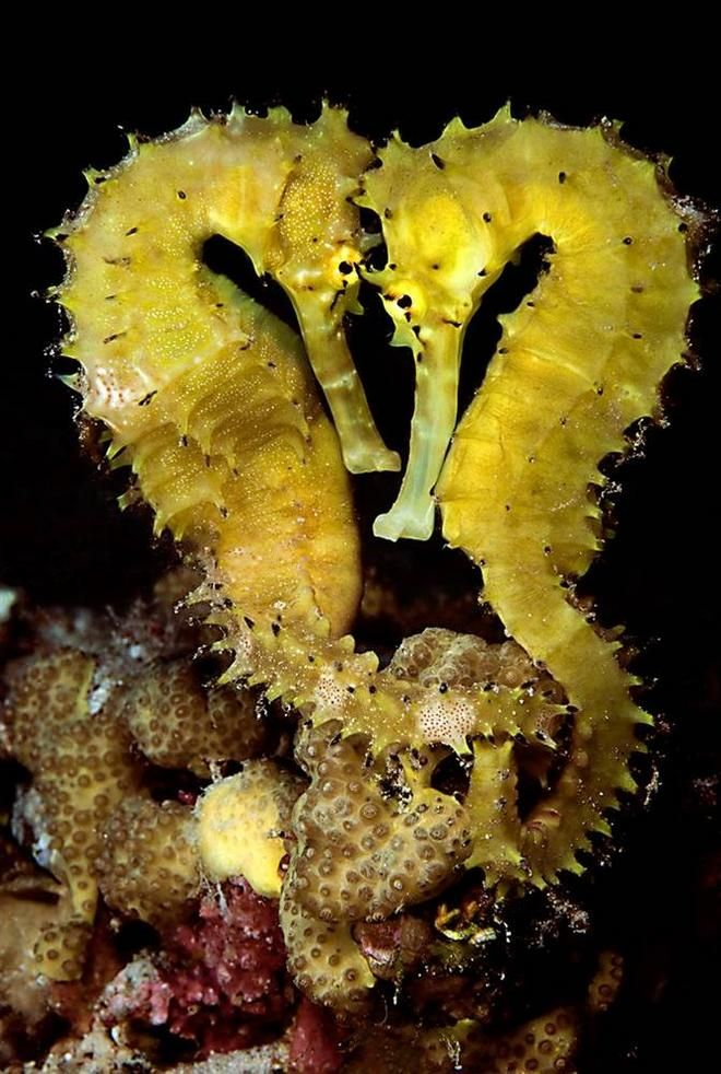 Do While Com This Website Is For Sale Do While Resources And Information Seahorse Sea Creatures Ocean Creatures