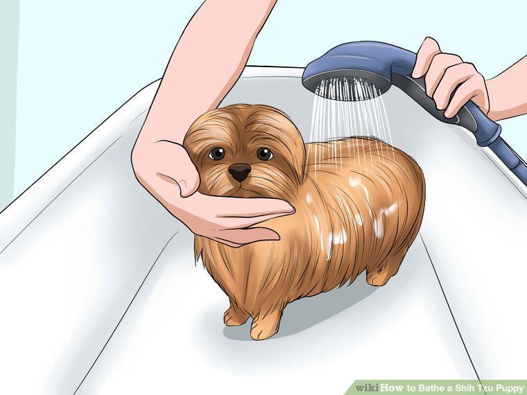 Bathe A Shih Tzu Puppy Shih Tzu Puppy Shih Tzu Dog Baby Shih Tzu