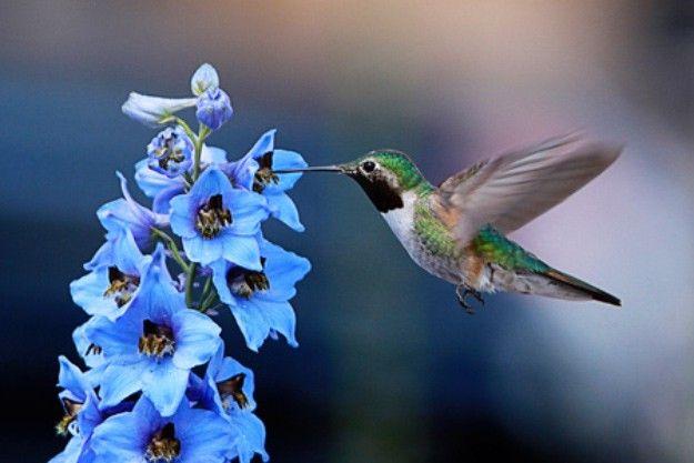 37 Flowers That Attract Hummingbirds To Keep In Your Homestead Hummingbird Pictures Hummingbird Photos Hummingbird Flowers