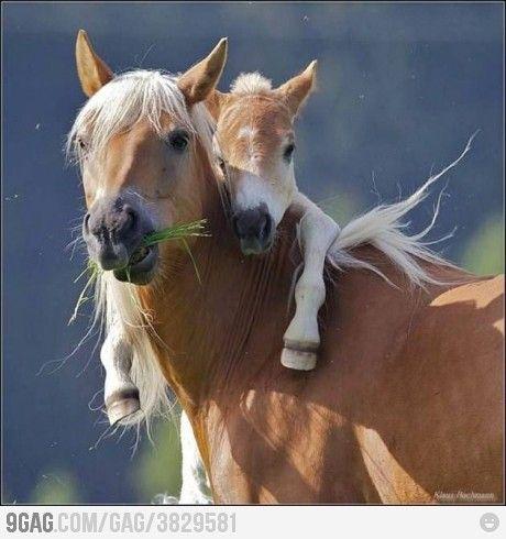 horsey attack hug