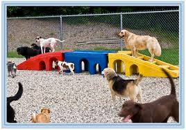 Image result for doggy day care