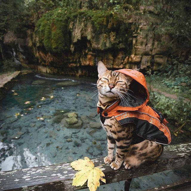 Kitty Raincoat!  #foundonweheartit #animals #pets #cuteanimals #animallovers #cutecats #catsofinstagram #kittycat #cat