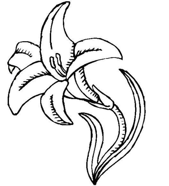 Lily Coloring Page Lily Pictures Flower Coloring Pages
