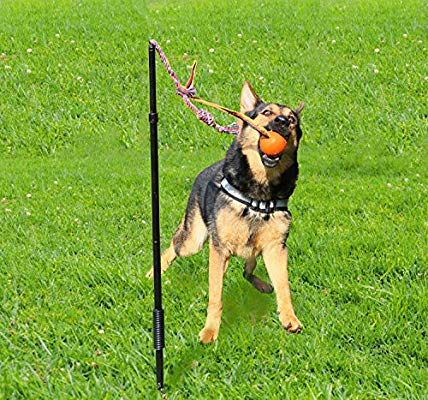 Highland Farms Select Dog Retractable Interactive Training