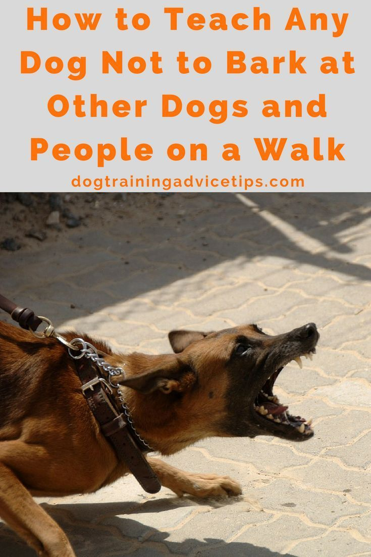How to Teach Any Dog Not to Bark at Other Dogs and People on a Walk ... | Training Dog To Not Bark