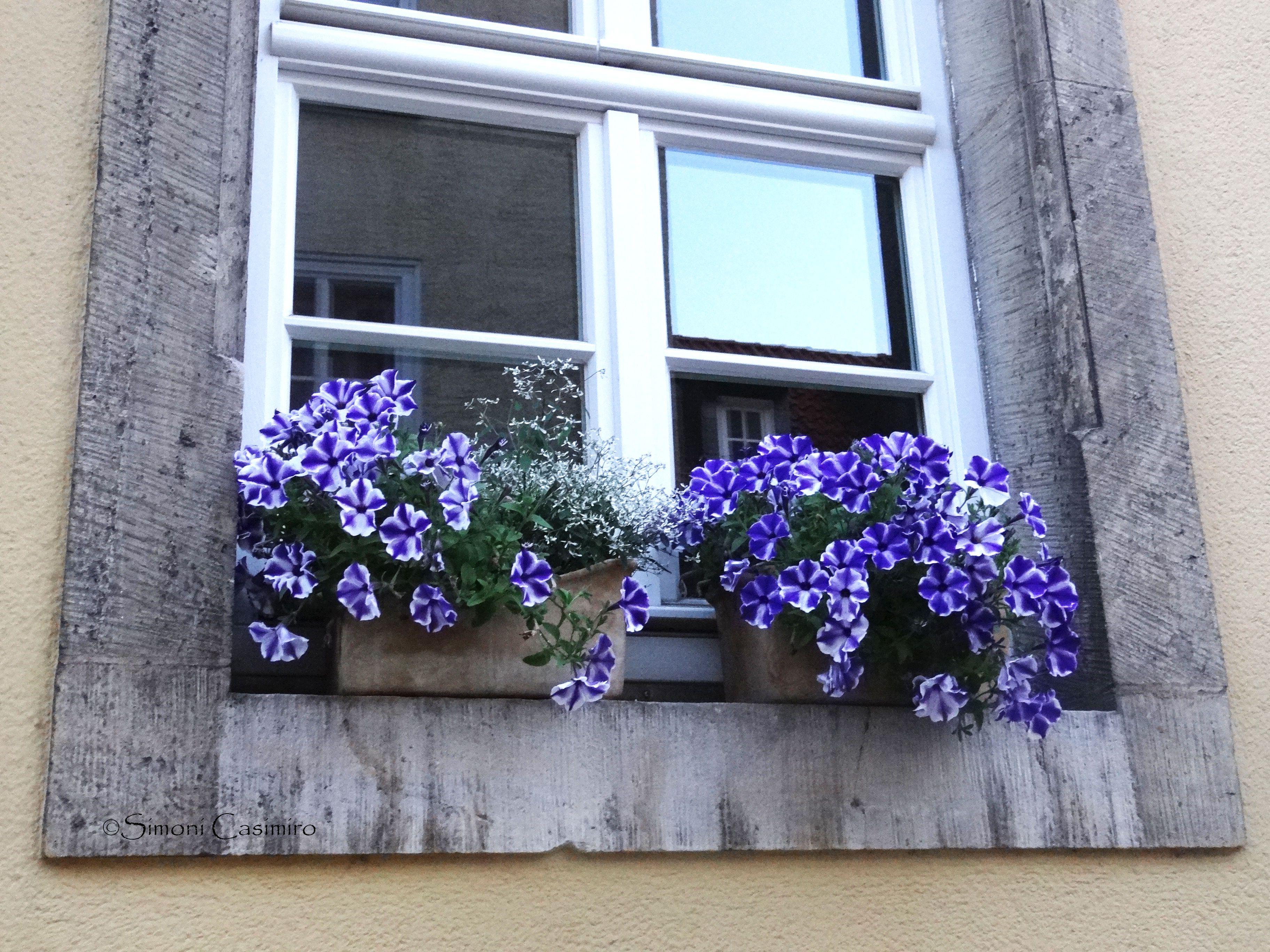 A janela na janela, e flores nela.
